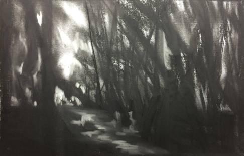 c16-deep-woods